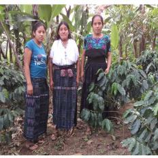 Grupo Agrícola Tzamjuyup Sector 1 Group