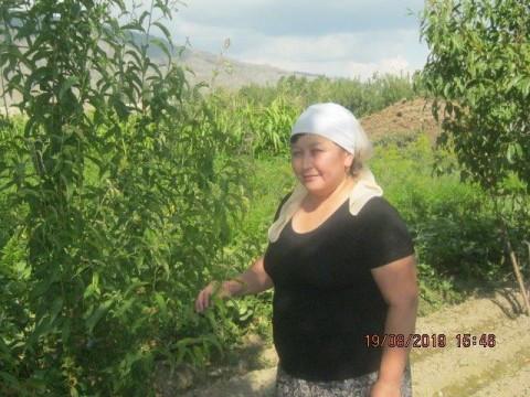 photo of Gulsina
